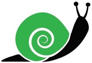 green snail_reflection